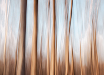 Linear Dance of Trees
